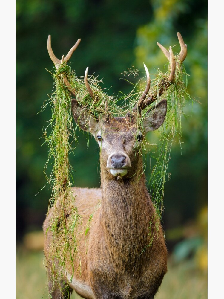 Red Deer Stag by RobKellyPhoto