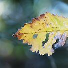 Leaf by Michelle Ordever