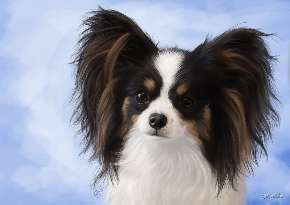 Evie the Papillon by genesia