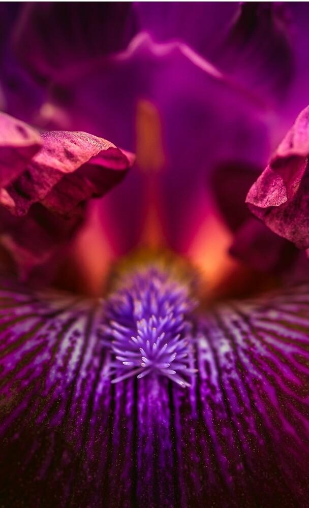 An Iris at the dentist by alan shapiro