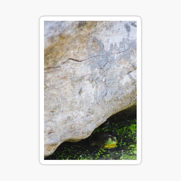 Green Frog Under Log Sticker