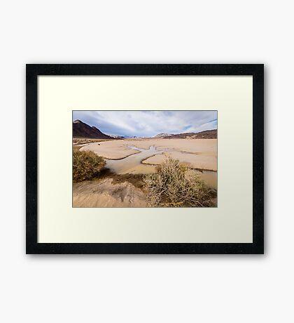 Water Tree in Death Valley Racetrack Framed Print