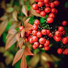 Cluster of Berries by Jessica Britton