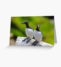 Guillemots, Saltee Island, County Wexford, Ireland Greeting Card