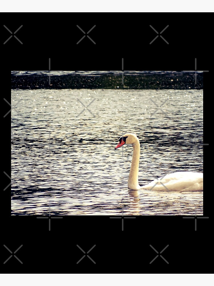 Swan, Swan sticker, Swan magnet, Swan socks by PicsByMi