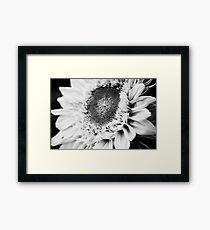 Not so sunny flower Framed Print
