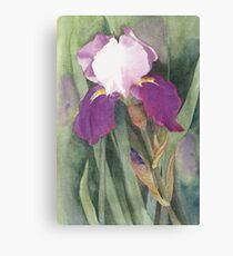 Suffragette Iris Canvas Print