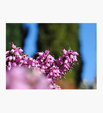 Starting To Feel Like Spring! Photographic Print