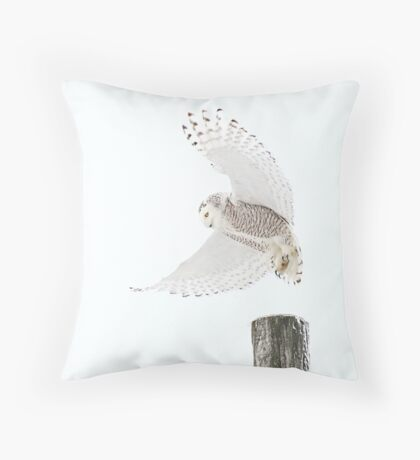 Startled - Snowy Owl Throw Pillow