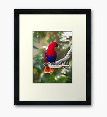 Female Electus Parrot Framed Print