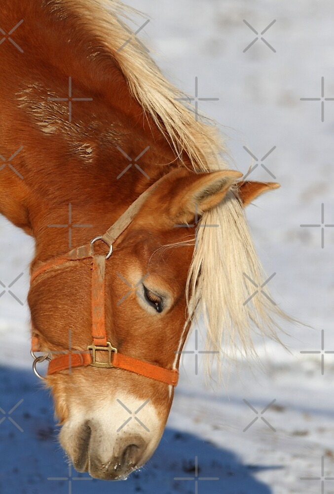 Shaggy Horse by Jim Cumming