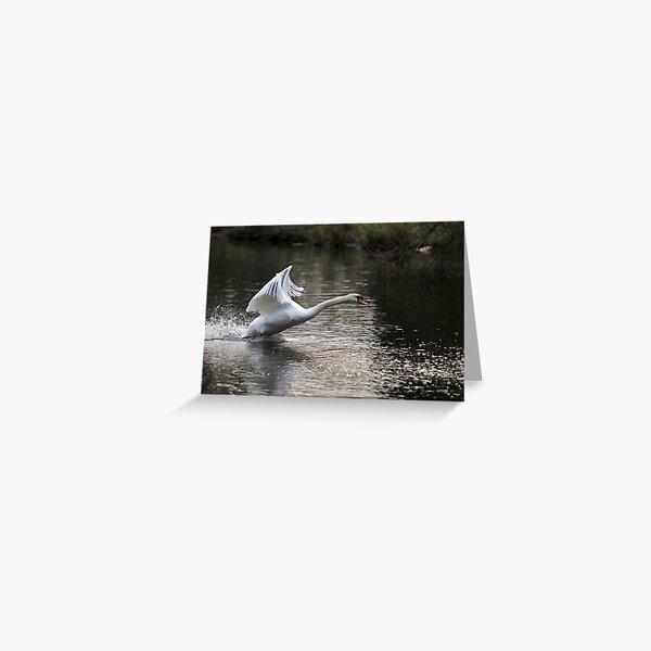 Swan Take off 1 Greeting Card