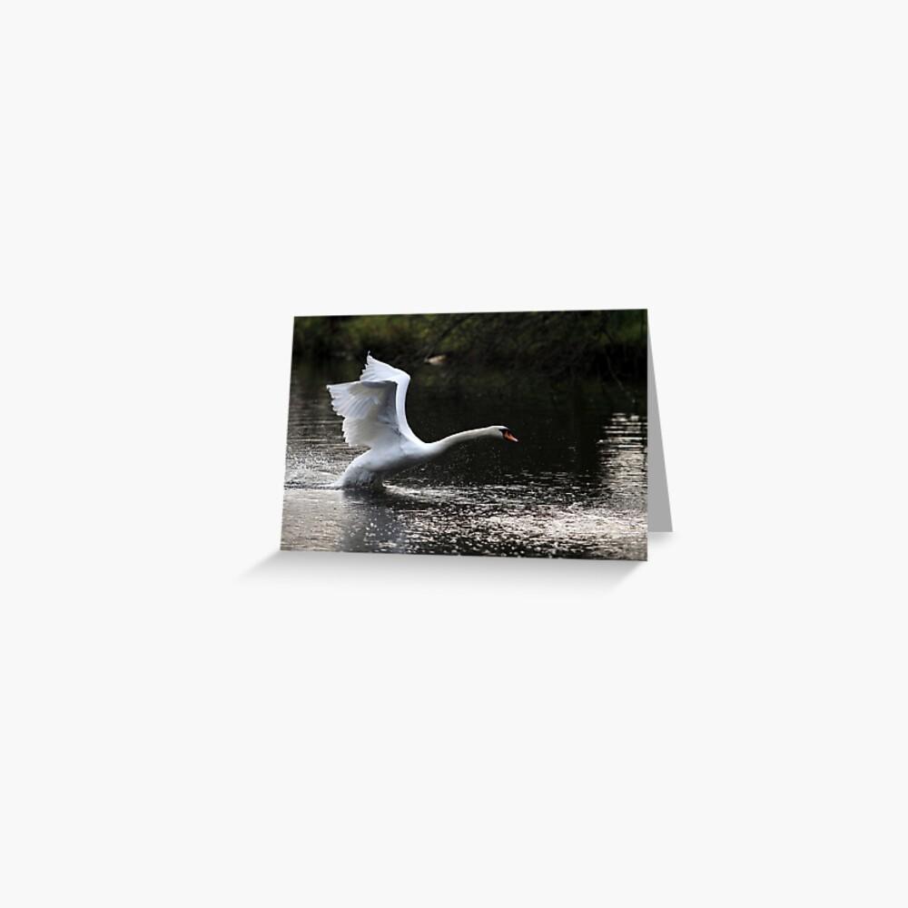 Swan Take off 2 Greeting Card