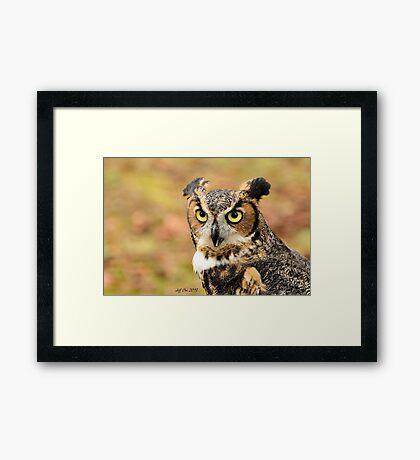 Great Horned Owl ( Bubo Virginianus) 1 Framed Print