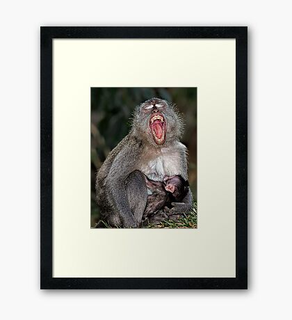 Mother and Baby suckling - Macaque Framed Print