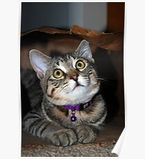 Baby Tasha In Her Bag Poster