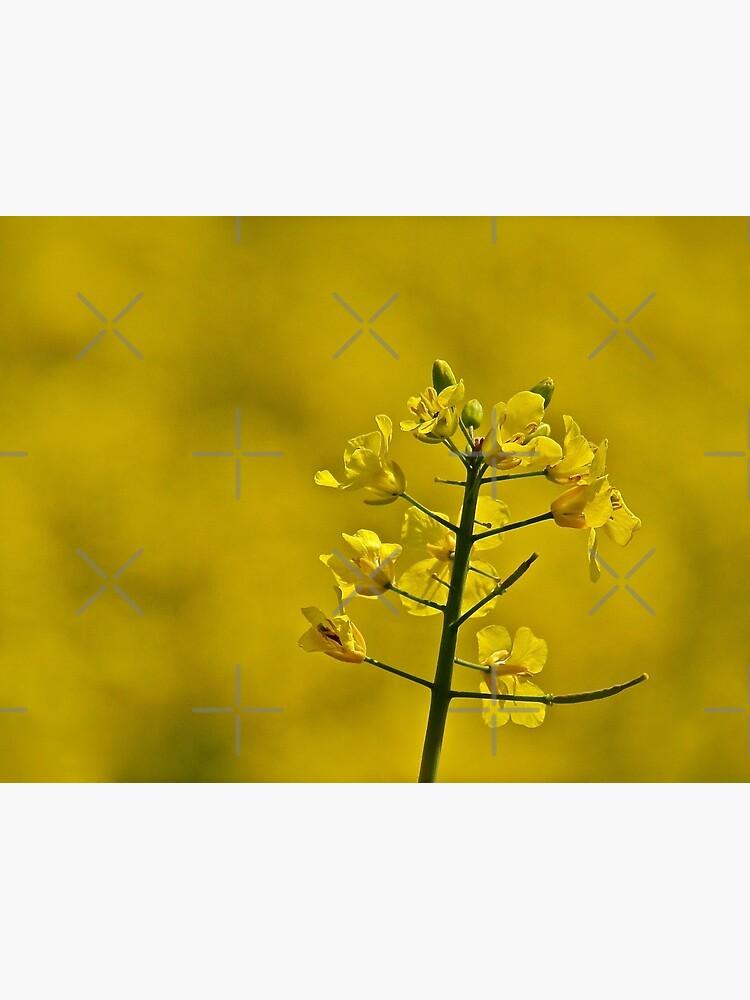Yellow Flowers by RyanDraws