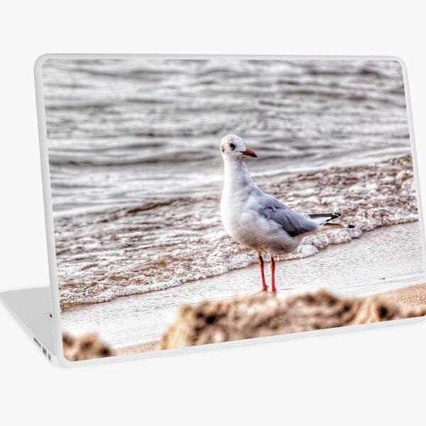 Seagull Laptop Skin