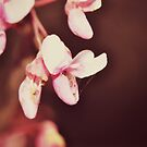 pink blooms 2 by Jamie McCall