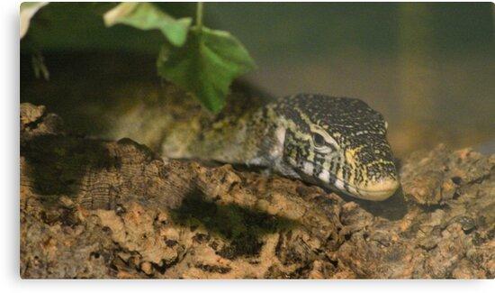Monitor Lizard by Jolie-73
