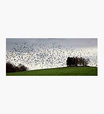 Fall Migration Photographic Print