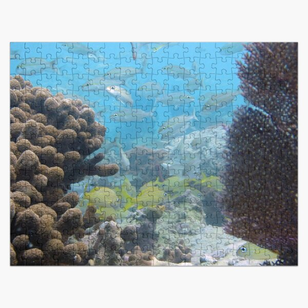 Watercolor Fish, French Grunt and Tomtate 01, St John, USVI Jigsaw Puzzle
