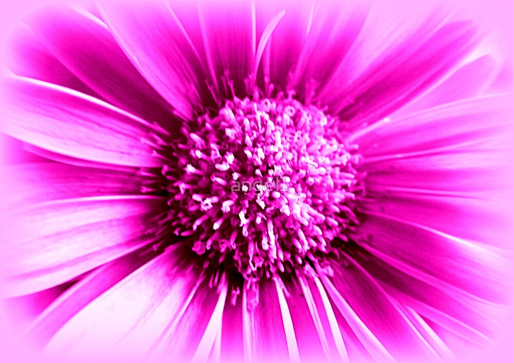 Pink Flower by ©The Creative  Minds