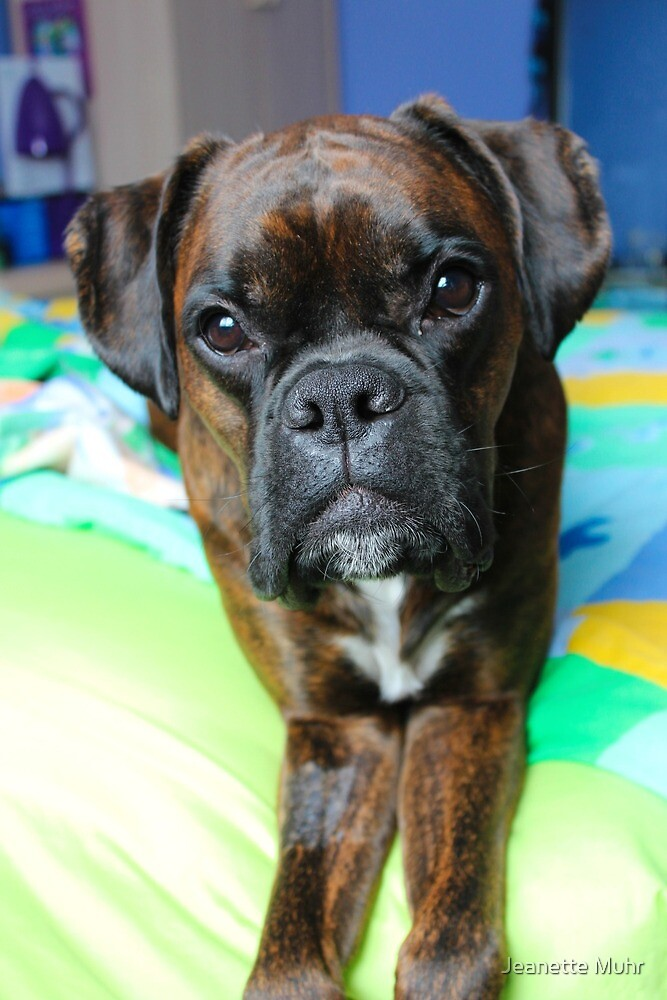 My handsome boy by Jeanette Muhr
