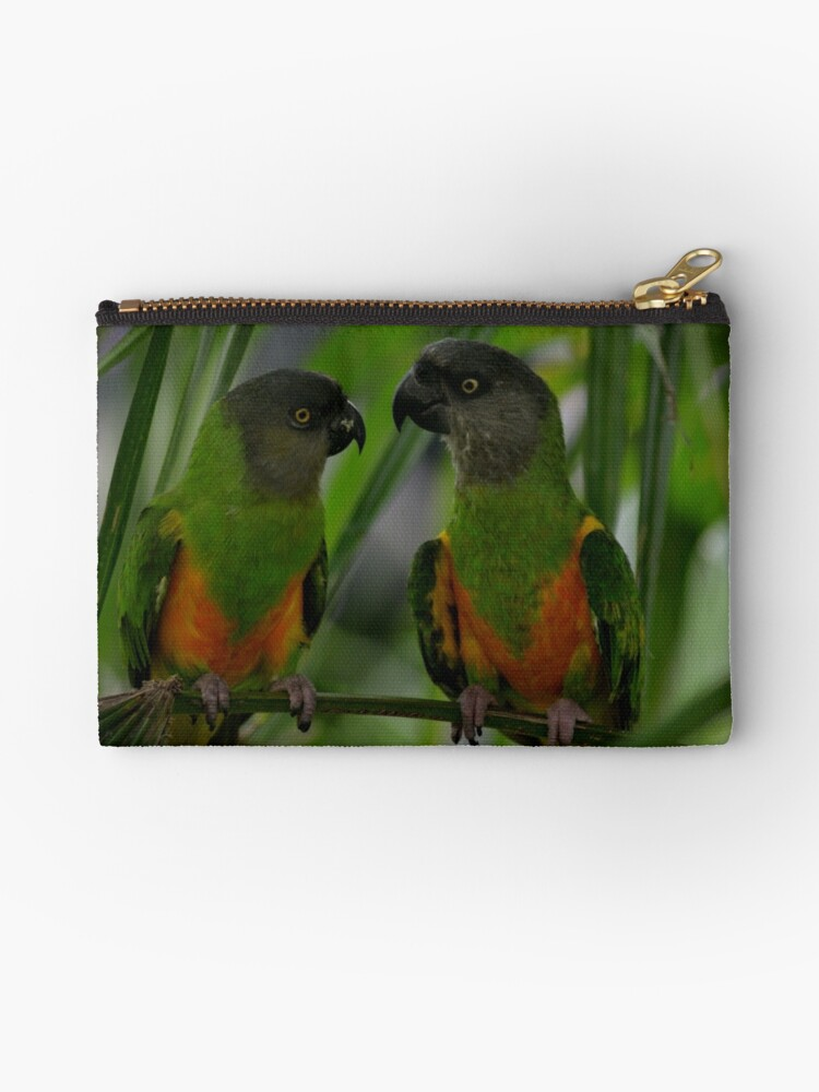 Parrots by Jolie-73