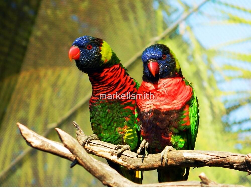 The Twin Marakeets by markellsmith