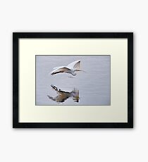 Great White Egret with Nesting Materials Framed Print