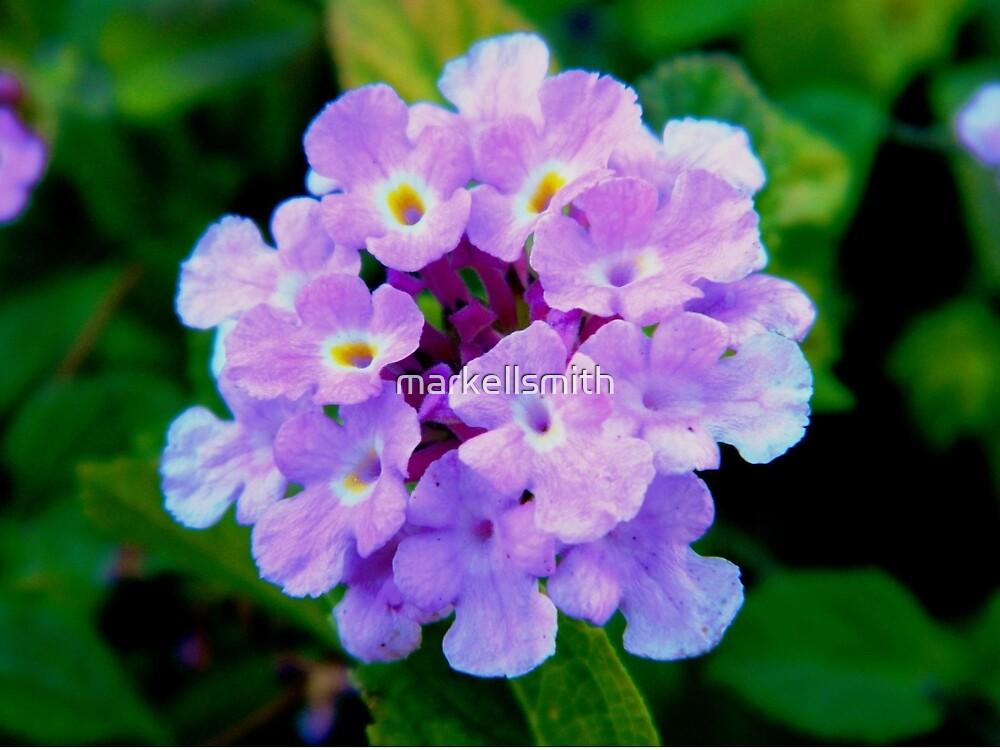 The Purple Lantana by markellsmith