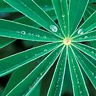 Lupine Leaves by Ellen McKnight