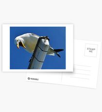 You Talking To Me? Postcards