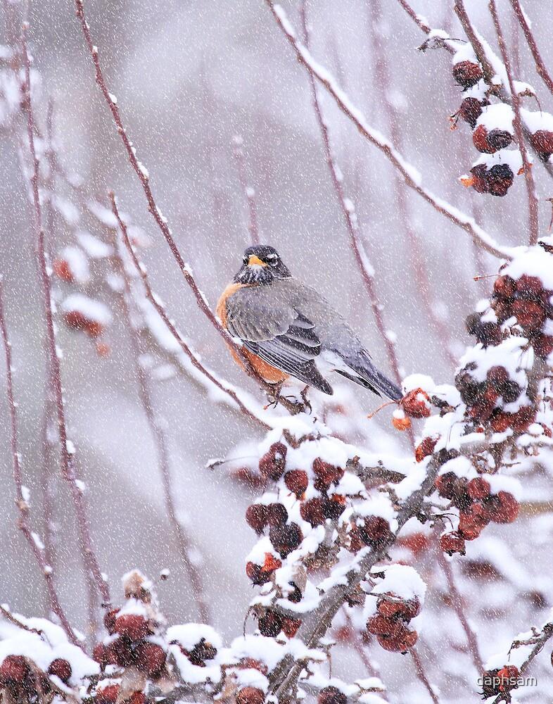 American Robin In Winter by daphsam