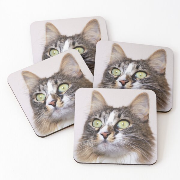 Dare to look into the eyes of the cat Coasters (Set of 4)