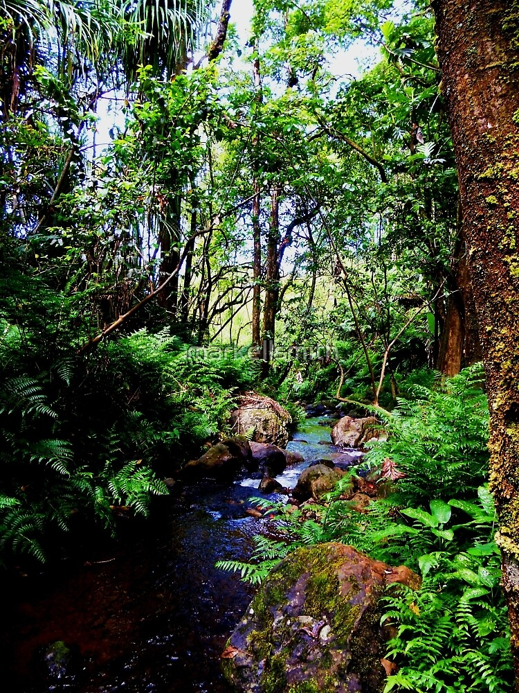 The Hawaiian Creek  by markellsmith
