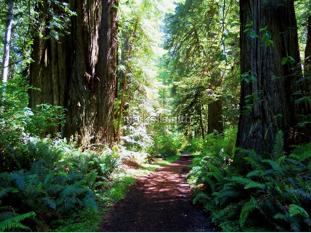 The Redwood Forest  by markellsmith