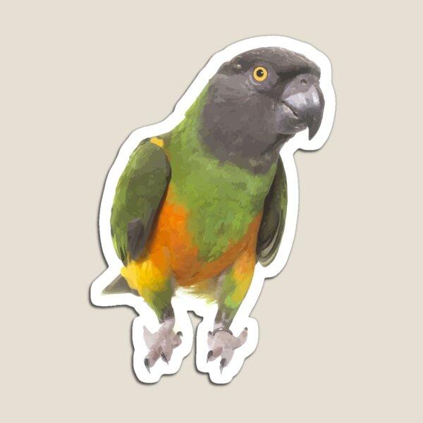 Senegal Parrot Magnet