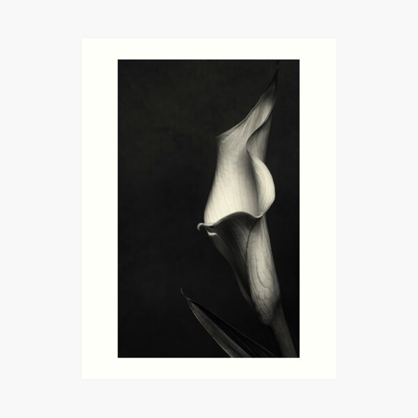 Calla III Art Print