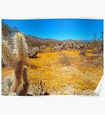 Anza Borrego Desert in Bloom Poster