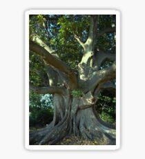 Fig Tree Sticker