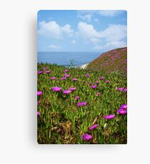 Springtime in Half Moon Bay Canvas Print