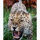 Leopard by daveashwin
