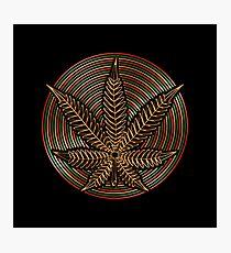 Cannabis Gold Photographic Print