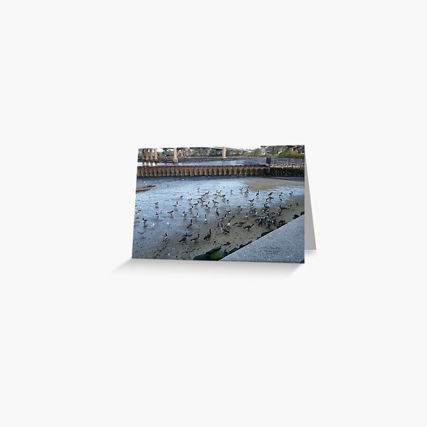 Beauty of nature: Throgs Neck Bridge , NYC Greeting Card
