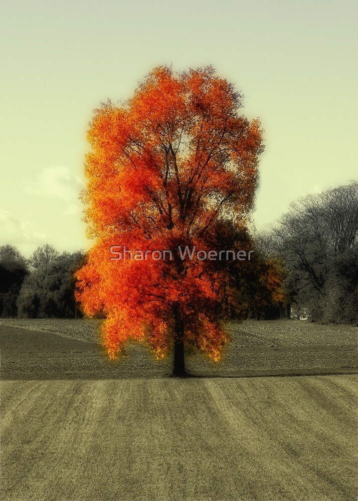 Autumn's Living Tree by Sharon Woerner