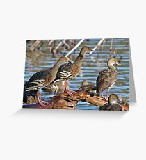 Plumed Whistling Ducks ~ Yep, where just another Duck Greeting Card
