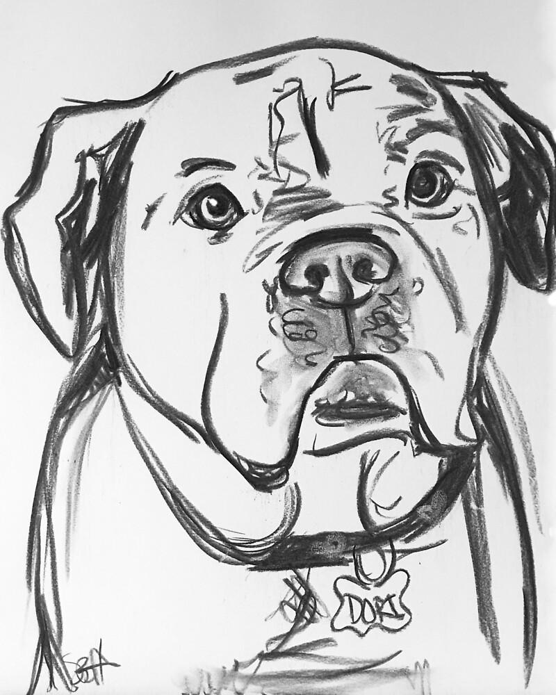 Dori The American Bulldog by paintersam