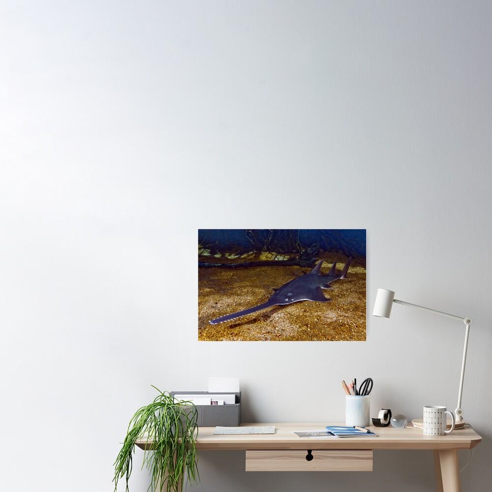 Reef rarity Poster